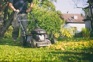 maintenance garden 2020