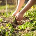 preparing garden 2020