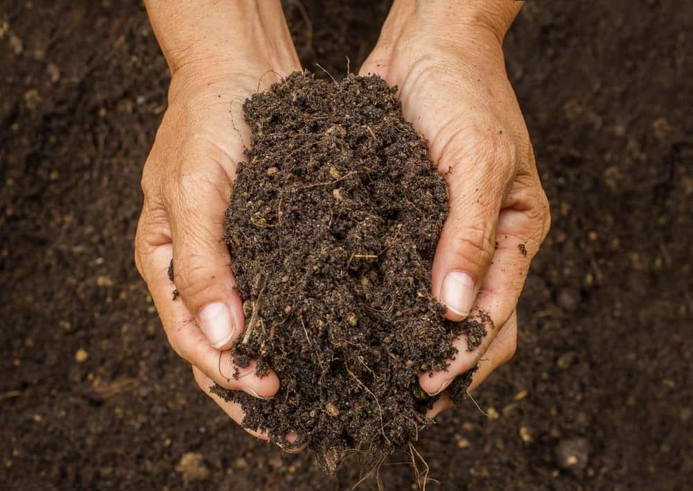 Topsoil in Cardiff